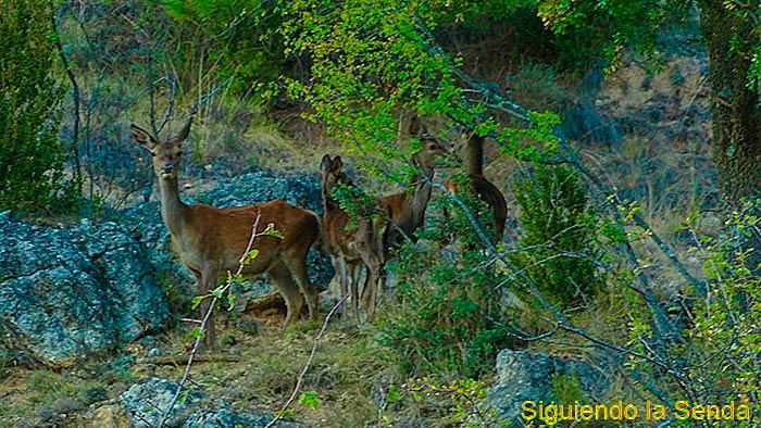 Avistamiento de los ciervos cerca de la laguna de Uña